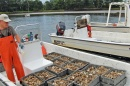 NH Commercial Oyster Farming Industry Gains Ground, Has Substantial Growth Potential