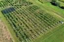 Learn to Grow Kiwiberries in New England