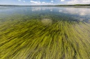 Eelgrass in Great Bay Estuary
