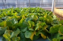 Sustainable Agriculture Spring Seminar Series Kicks Off at UNH March 6