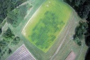 UNH Researchers Find Forage Radish is the Cream of Cover Crops