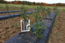 UNH Buckthorn project