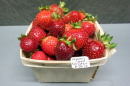 UNH organic strawberry harvest