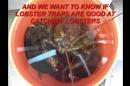 The Tales a Lobster Trap Tells