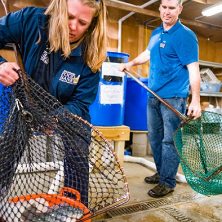 Todd Guerdat of UNH and Eileen Groll Liponis of N.H. Food Bank harvest tilapia