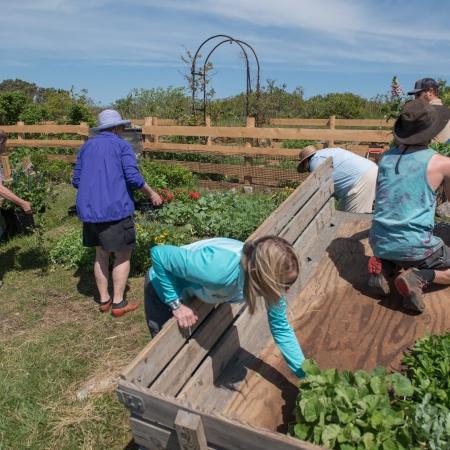 An Island Garden (Gardening in America) Celia Thaxter