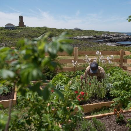 Celia Thaxter's Island Garden 2016