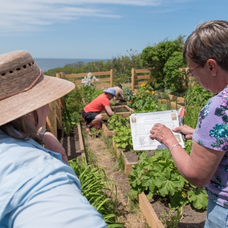 gardeners look at Celia Thaxter's garden map