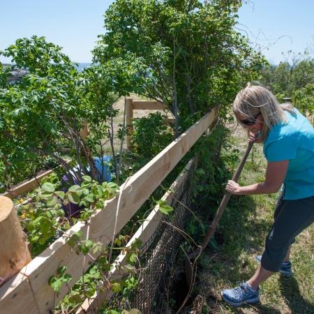 Planting Celia Thaxter's garden
