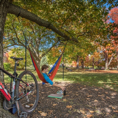 A hammock hanging from a tree