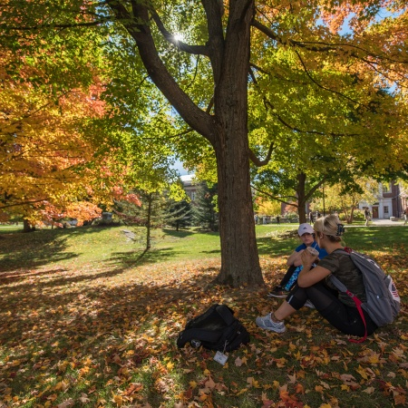 Students sitting under a tree