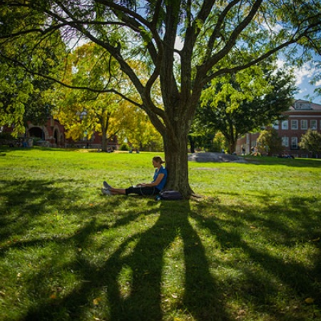 UNH student sitting under a tree