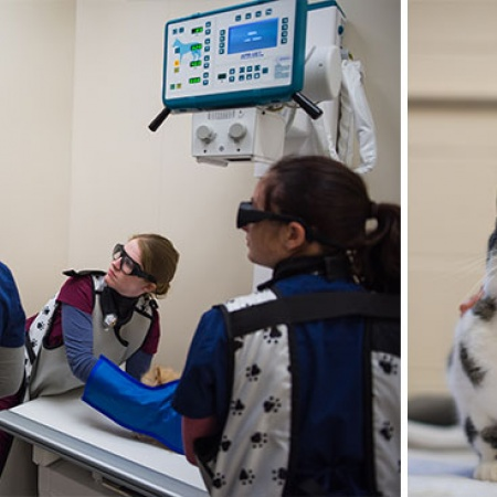 UNH students working in an on-campus vet clinic