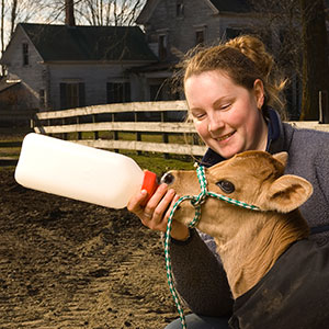 UNH female student feeds calf with a bottle