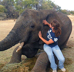 Jackie Buckley inspecting an elephant in South Africa