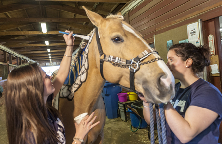 Equine Education Day